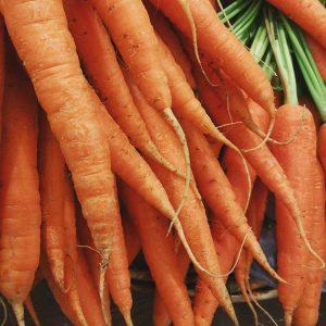zanahoria Ecológica de producción nacional