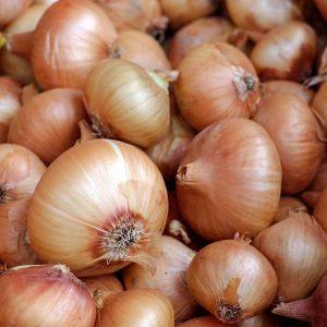 Cebolla Producción Agroecológica a Granel