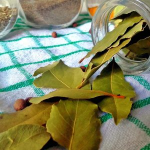 Laurel fresco rama