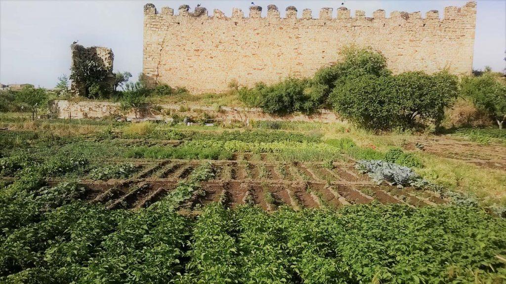 Huerta Mangurria Arroyo de la Luz